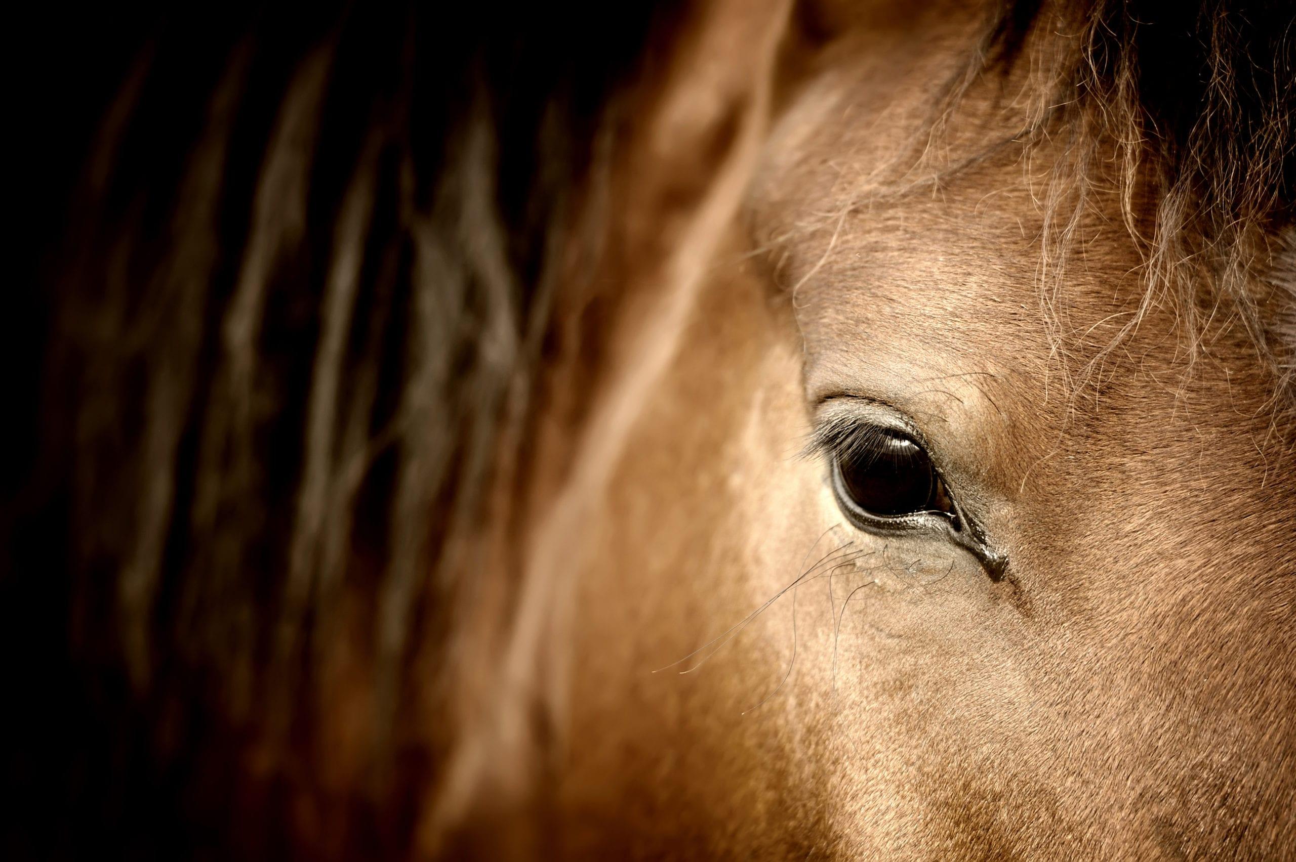 Hest i trening hos Venavind trener 1 Therese Heramb
